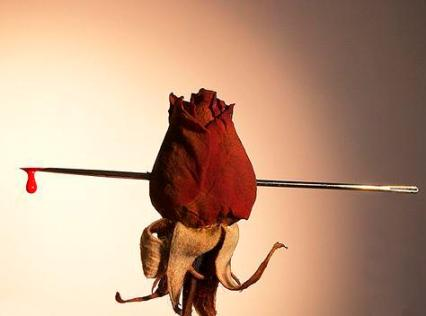 Rosa que sangra