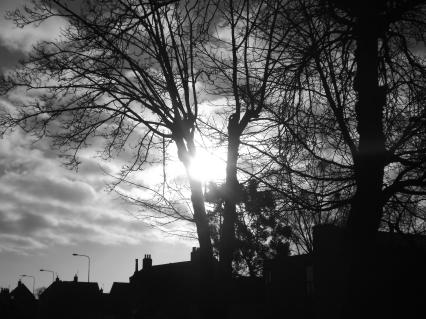 Céu & árvore_PB