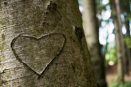 Coração_Árvore_Tronco