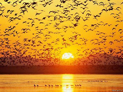 Pássaros_Amanhecer